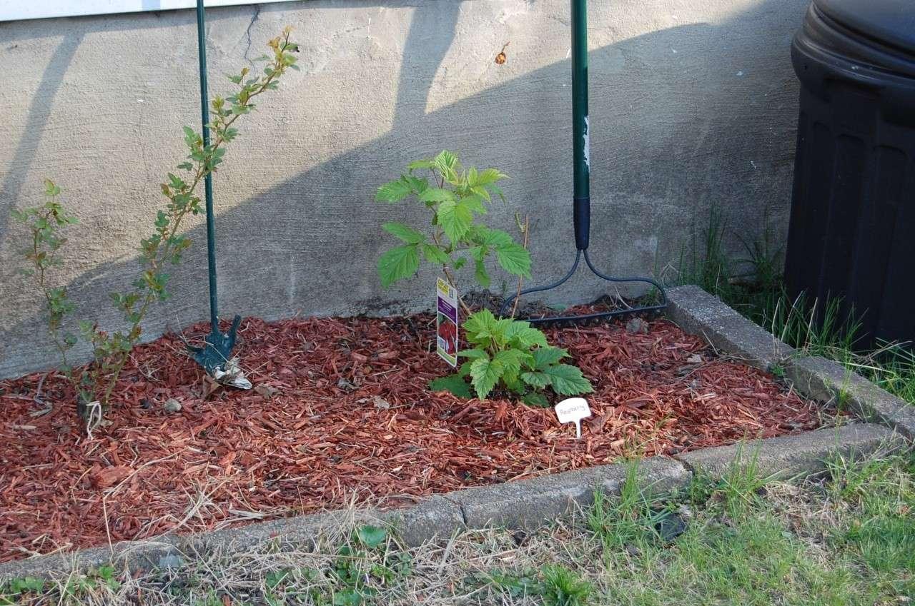 Erin's Garden April 15th, 2011 00418