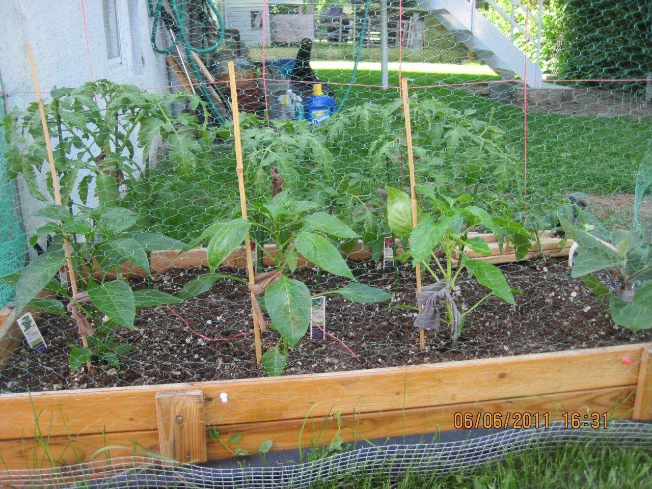 More plants wilting Garde110