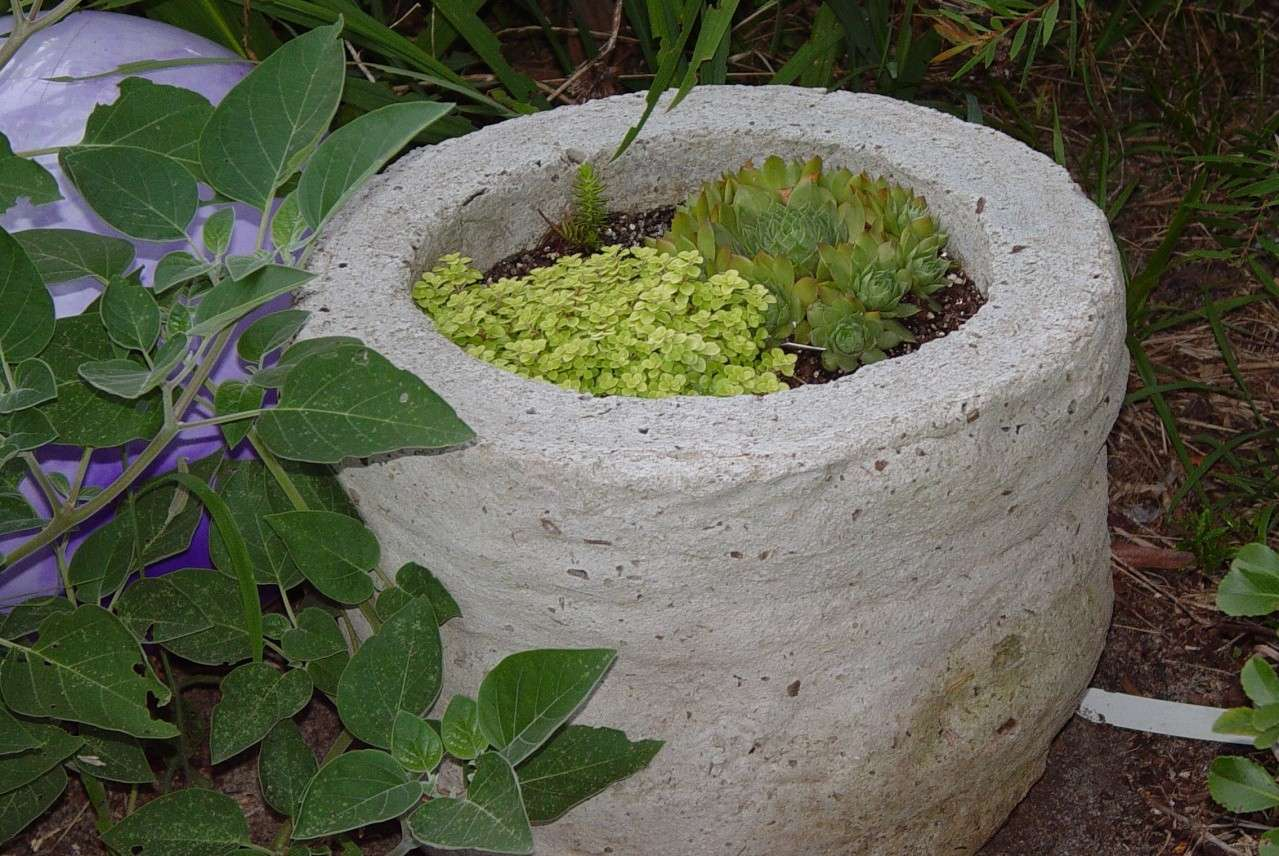 Good article on peat, coir, rice hulls, etc. Garden66
