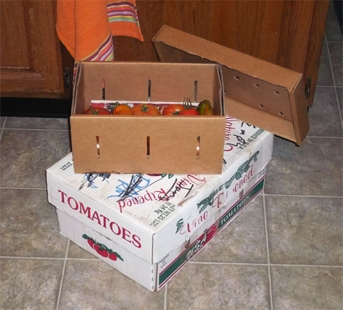 Green Tomatoes and no more time... Tombox10