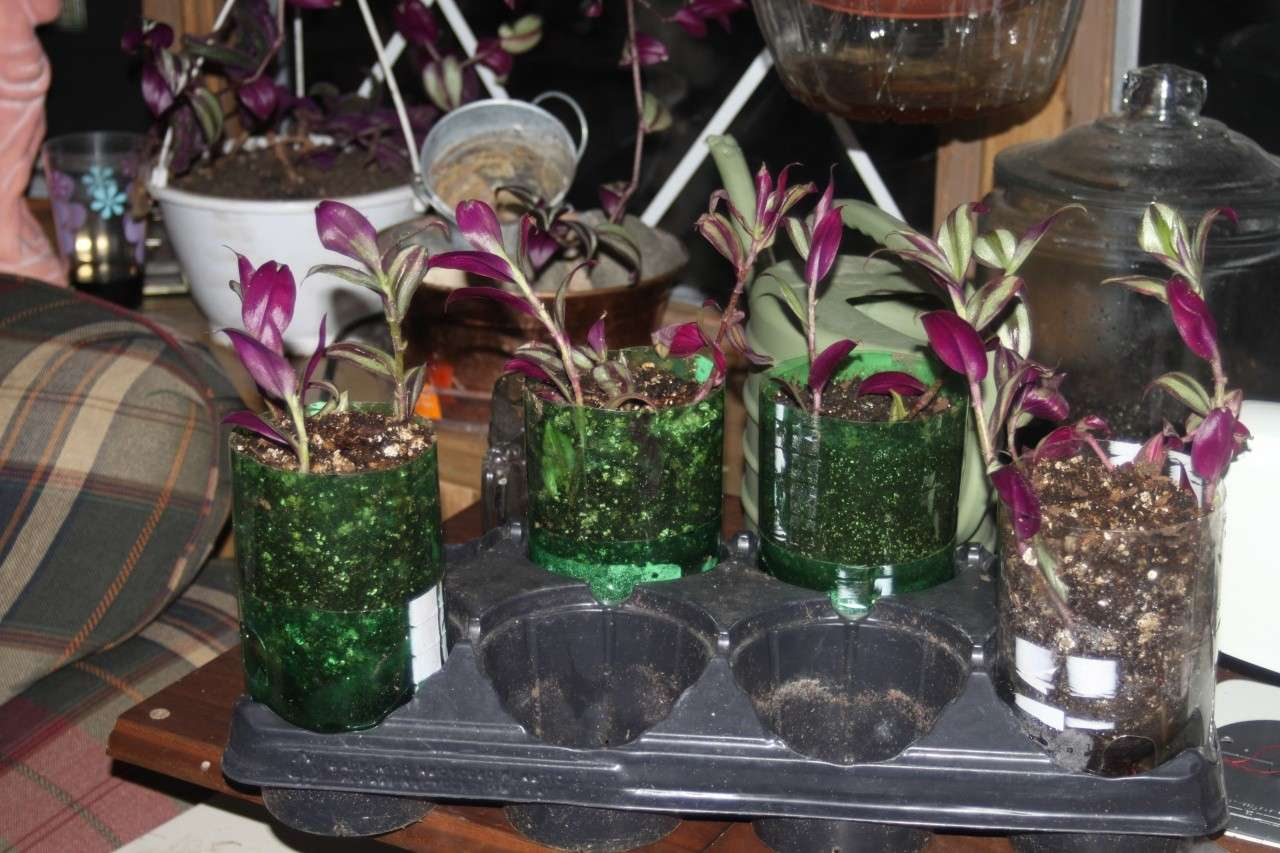 recycled self watering containers for plants 01614