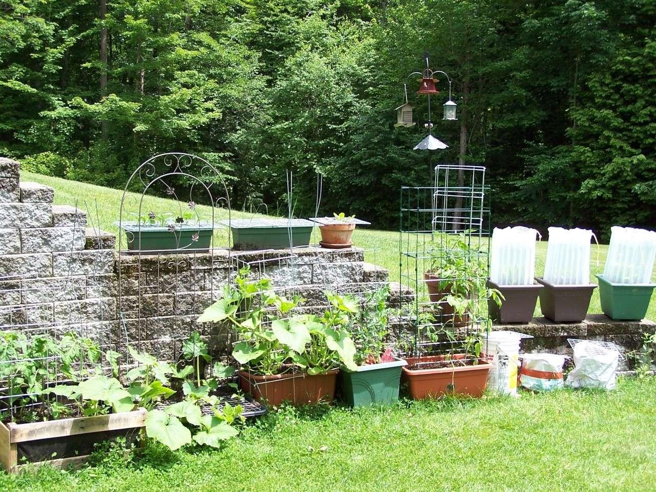 Planting Cantaloupe/Watermelon/Pumpkin Vertically? 100_0310