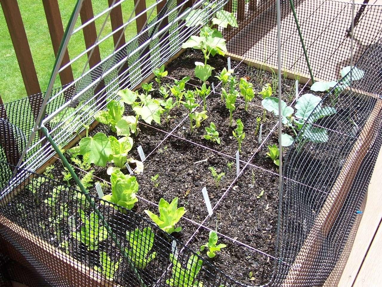 Planting Cantaloupe/Watermelon/Pumpkin Vertically? 100_0311
