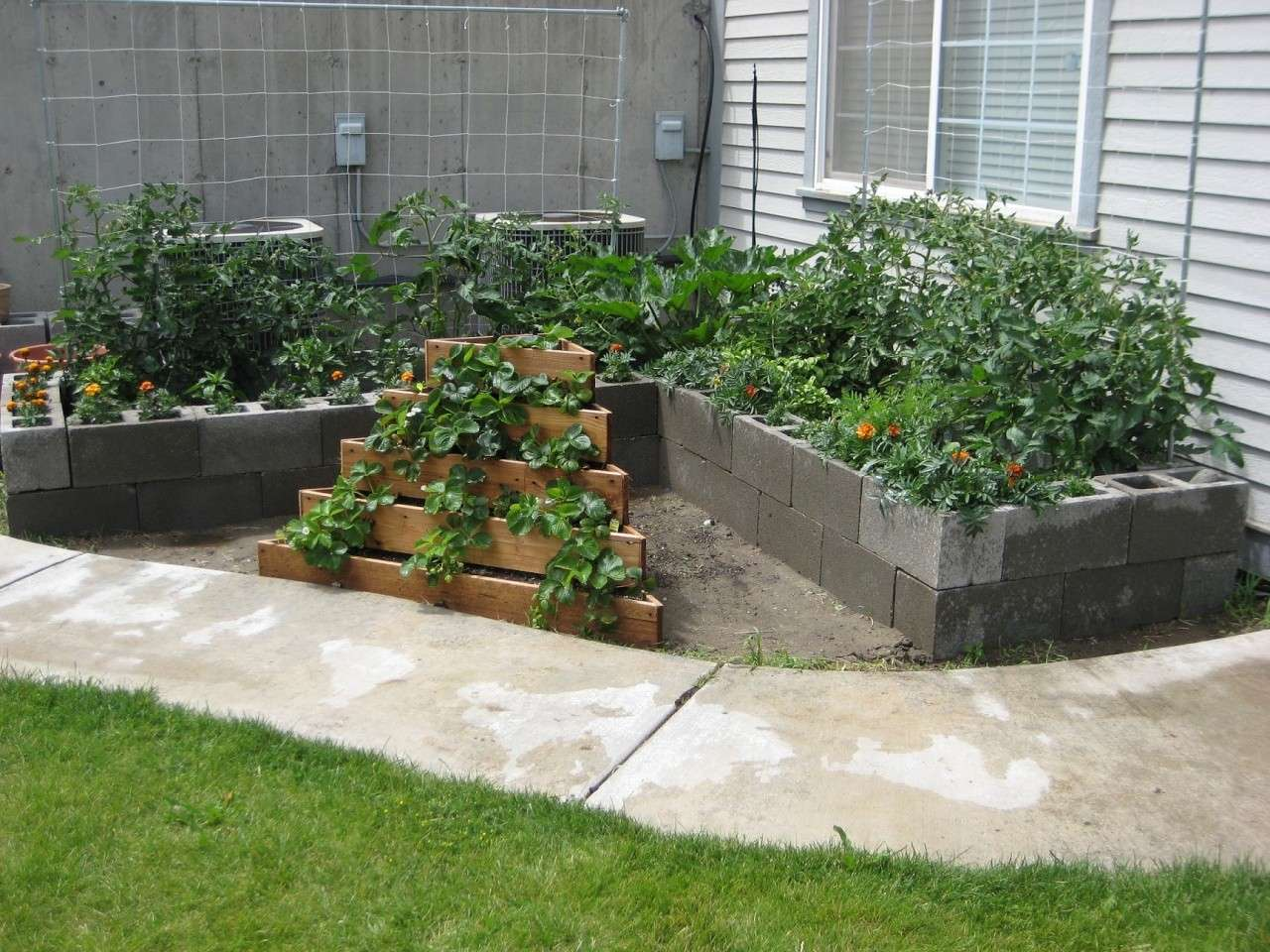 pictures of my cinder block SFG Garden53
