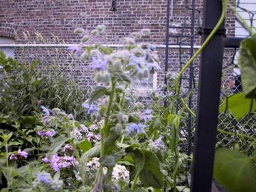 ? Unapetizing Podding, Flowering, Fuzzy Plant... Img_0025
