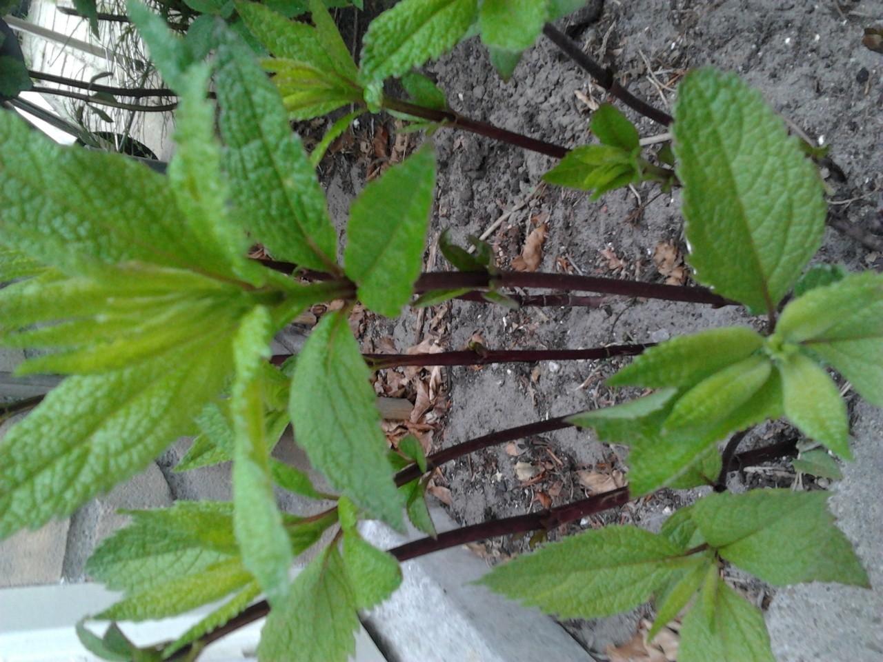 Please help me identify these plants.. Plant211