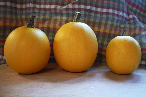 Pumpkins, Squash, Cukes... trellis or spill over? Smallw10