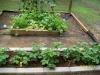 My Garden Update, Show me yours Strawb23